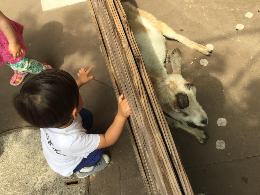 子供と動物